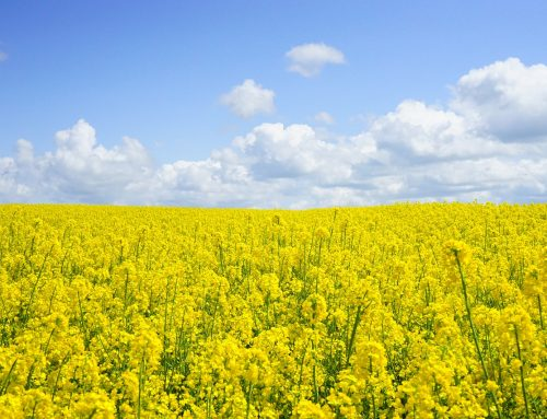 Hay fever…….. not to be sniffed at!